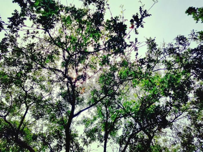Backgrounds Full Frame Tree Green Color Low Angle View Nature Growth No People Beauty In Nature Outdoors Day Branch Plant Sky Close-up Fragility Freshness EyeEmNewHere