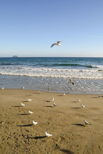 seagulls on the beach in winter Seagulls Seagulls On The Beach Seagulls And Sea Beach Sea Sea And Sky Seascape Scenic Scenics Wintertime Tranquility Travel Destinations Seascape Sandy Beach Waves Sea Waves Sunny Day Relaxing Time Flying Birds Standing Birds Seagulls Standing