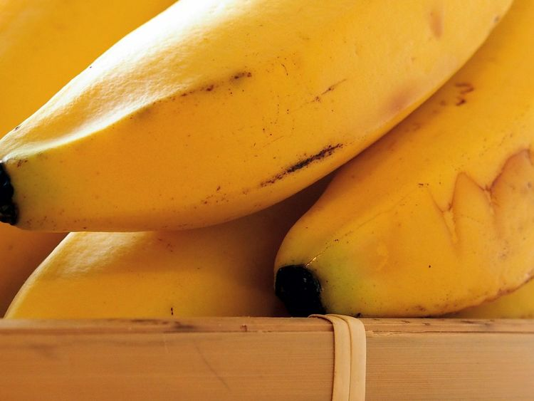 Kenan Ates Photography Banana Bananas Banana Fruit Yellow No People Desert Shadow Day Nature Close-up Outdoors