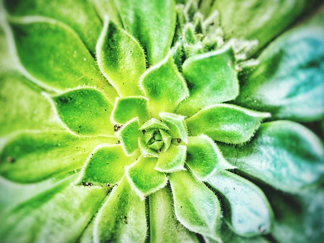 Succulent Green Color Backgrounds Full Frame Close-up Growth Nature No People Plant Freshness Beauty In Nature