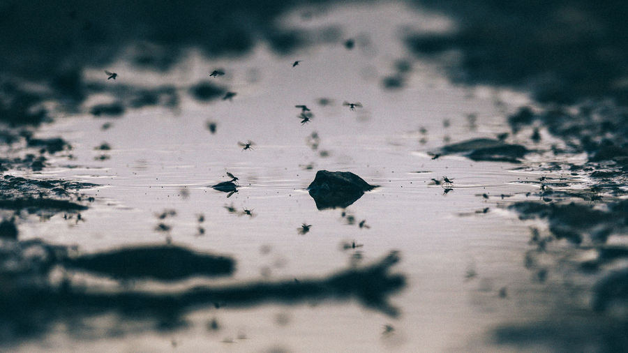 Insects flying over lake