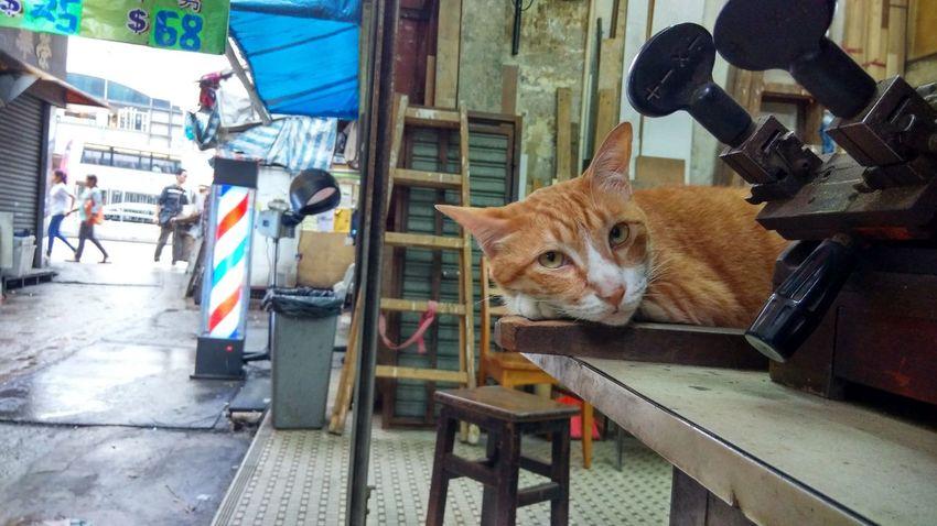 Animalhead AnimalTheme Cat Day Daydreaming Daylight Domesticanimal Feline Ginger Gingercat Mammal Sleepy Sleepycat Street Tabby TabbyCat