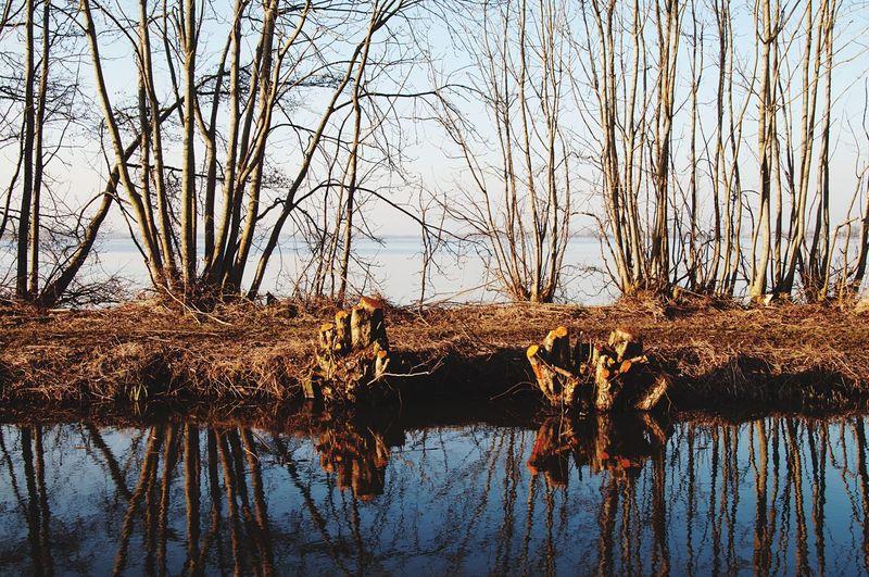 Eye4photography  EyeEm Best Shots Landscape Reed - Grass Family Tree Willow Tree Water Reflection Reflecfions Winter Netherlands