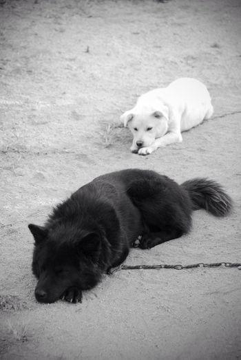 Dog Black And White Photo