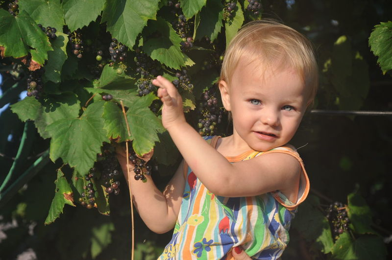 Portrait Of Cute Girl Plucking Grapes From Plant