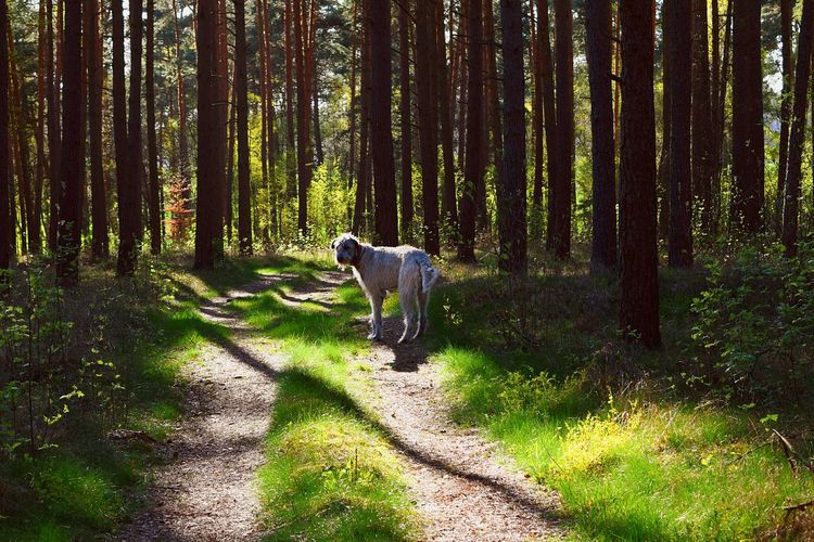 Altmark Taking Photos Check This Out My Favorite Photo TreePorn Hugging A Tree The Places I've Been Today Spring 2016 Green Green Green!  Gegenlicht Showcase May How's The Weather Today? Deep In The Woods May 2016 A Walk In The Woods Dog Of The Year 2016 Irish Wolfhound Dogwalk Dogslife Cearnaigh Springtime Dog Of The Day Dog Of Eyeem Dog Love Sun