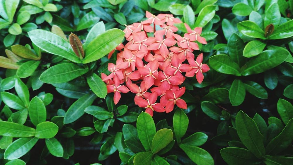 Nature! Freshness Green Color Red Nature Maximum Closeness