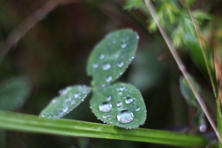 Rain Autumn Forest Park Macro Helios 44-2 58mm F2 Nature