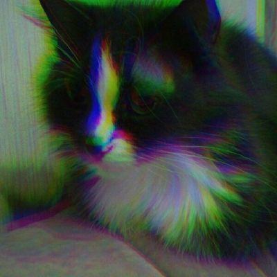кошка продолжение ??
