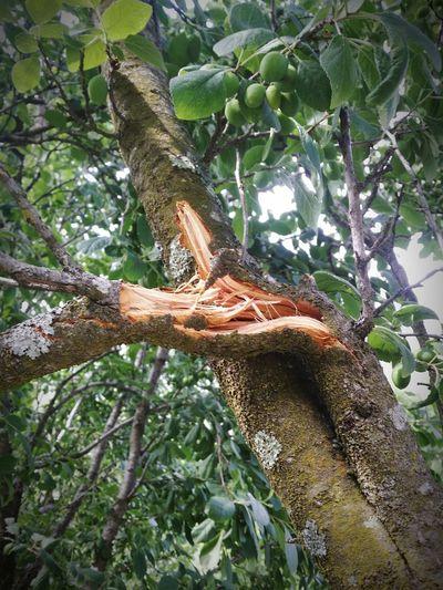 A branch broken