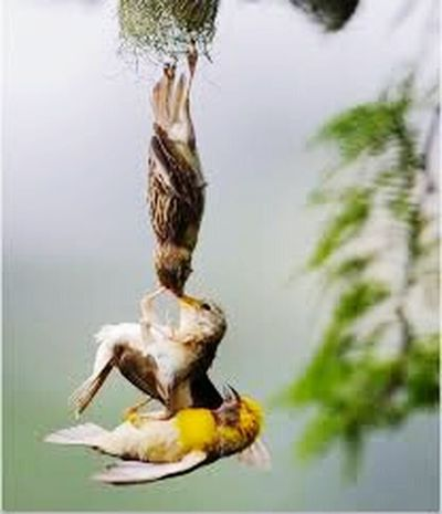 Birds adequate for somemore than human beings. Balti Hicham.