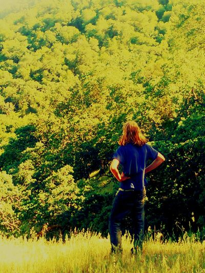 Amidst The Wild Brady Lewis Fate's Forest Tee Trees Wild Explore Adventure Is Out There