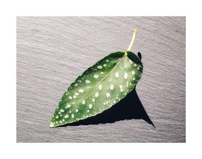 Pluie du printemps Still Life Minimalism Plant Part Leaf Close-up Studio Shot No People Transfer Print
