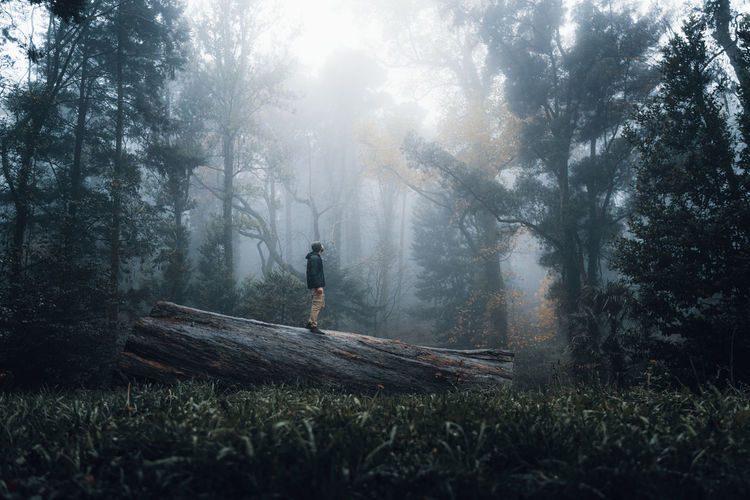 Man standing on field in forest