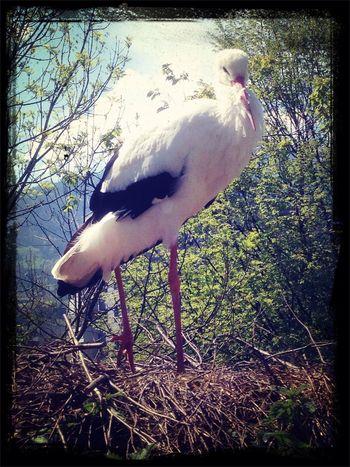 Stork Cabu Filter EyeEmSwiss