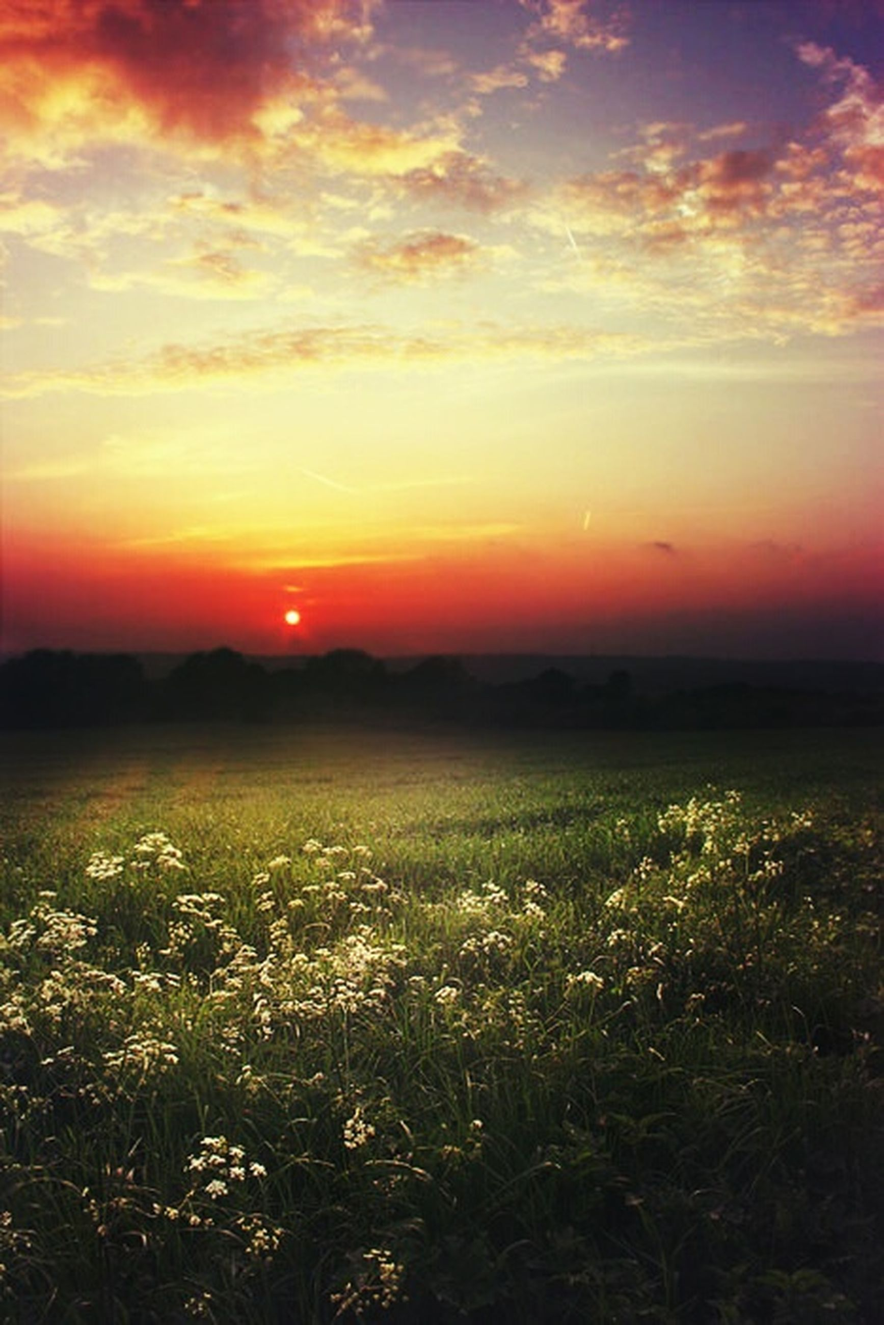 sunset, beauty in nature, tranquil scene, scenics, sky, tranquility, orange color, nature, field, sun, growth, landscape, idyllic, plant, cloud - sky, flower, silhouette, outdoors, cloud, no people