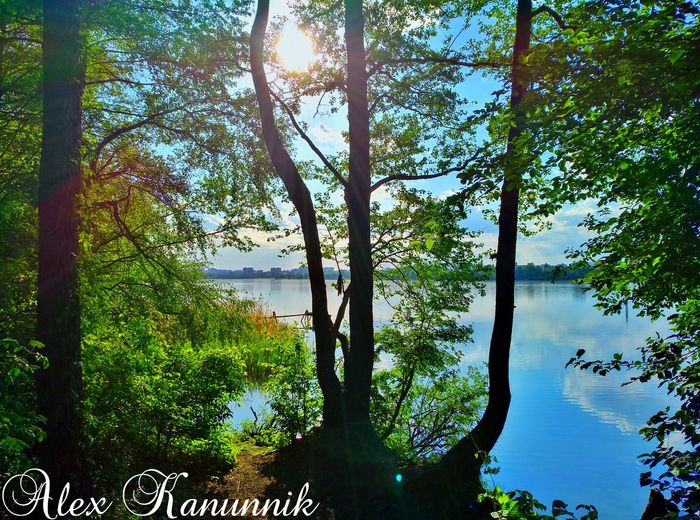Tree Water Nature Reflection Outdoors Lake Tranquility Green Color Day Beauty In Nature Landscape Sky Scenics No People Branch