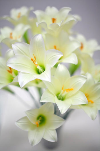 lily flowers close up Flower Flowering Plant Plant Vulnerability  Beauty In Nature Freshness Fragility Petal Close-up White Color Flower Head Inflorescence Nature No People Growth Selective Focus Indoors  Focus On Foreground Day Pollen Flower Arrangement Bunch Of Flowers Bouquet Lily Flower