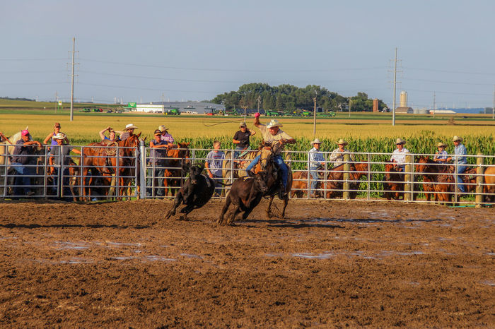 Rodeo Calf Canon60d Canonphotography Cattle Domestic Animals Fair Fence Horse Livestock Muddy Outdoors Rodeo Roping Rural America Rural Scene