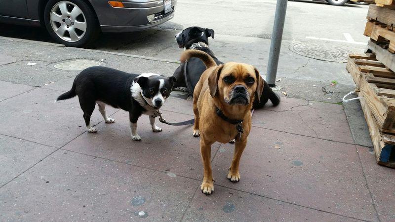 Doggie Moving On Oakland Ca The Week On EyeEm