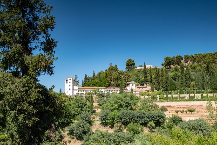 Alhambra (Granada) Alhambra Palace Granada Alhambra De Granada  Granada Granada, Spain Alhambra Ancient Civilization Architecture Beauty In Nature Blue Building Building Exterior Built Structure Clear Sky Copy Space Day Green Color Growth History Nature No People Outdoors Plant Sky Sunlight The Past Tree
