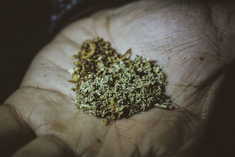 King Mix Human Hand Human Body Part One Person Human Finger Lifestyles Real People Close-up Personal Perspective Holding Marijuana - Herbal Cannabis Indoors  Cannabis Plant Day