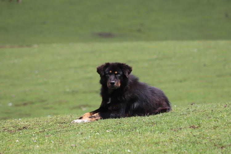 Dog Pets Black