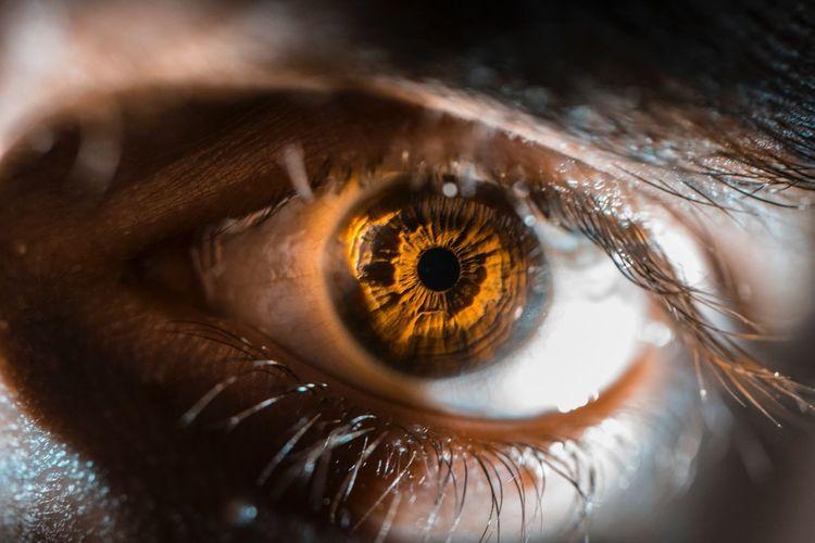 Human Eye Human Body Part Eyelash Eyesight One Person Looking At Camera Sensory Perception Portrait Eyeball Iris - Eye Close-up Indoors  People Day