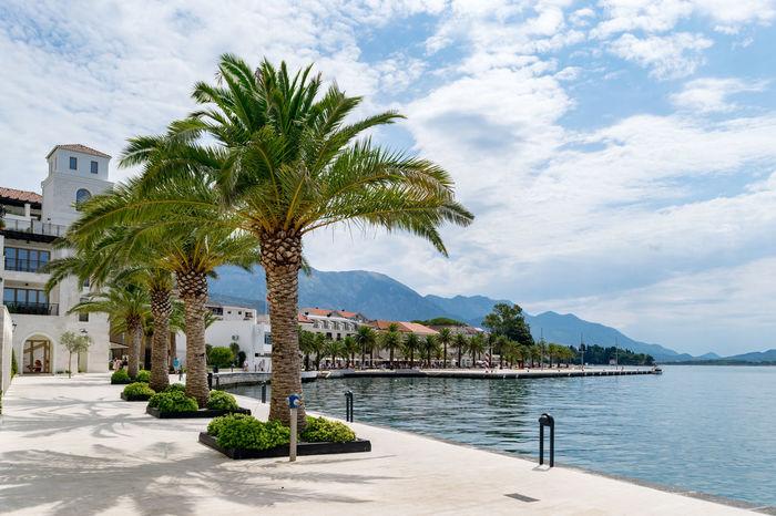 Beauty Luxury Luxurylifestyle  Montenegro No People Palm Tree Portomontenegro Sky Tourist Attraction  Travel Travel Destinations Tree Water