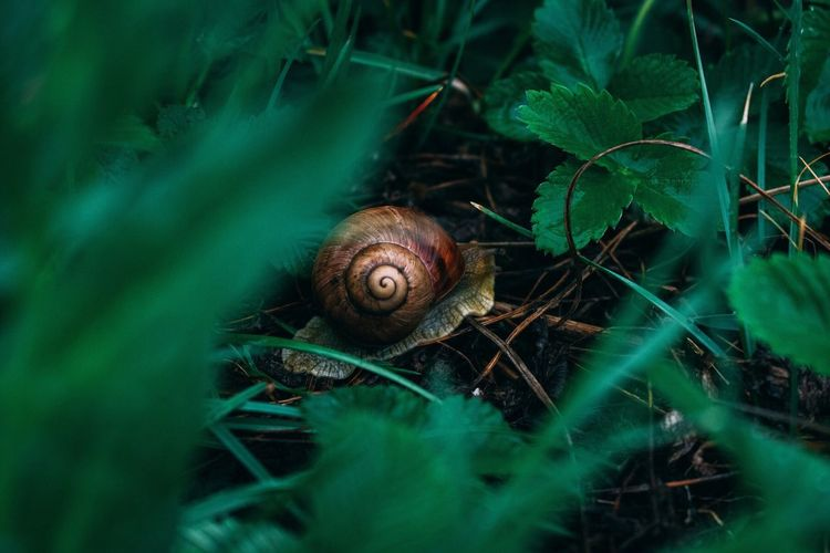 Close-up of snail amidst plants