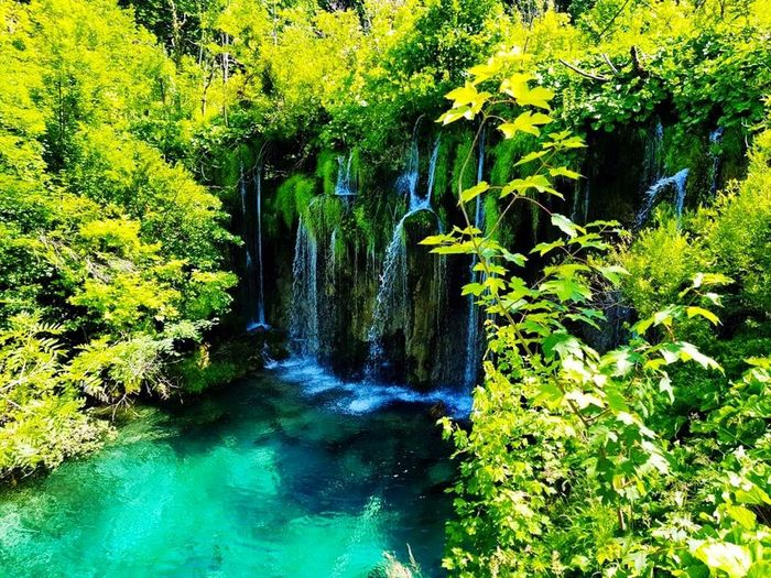 Waterfall EyeEmNewHere Croatia Fancy A Dip Beauty In Nature Falling Water Waterfall Water Plant Tree Green Color Beauty In Nature Growth Nature Scenics - Nature Day Tranquility No People Forest Outdoors Motion Tranquil Scene Lake Land Foliage Lush Foliage Flowing Water