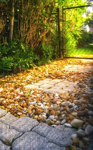 Nature Outdoors Soft Focus no people Tranquility Beauty In Nature Day Pebbles And Stones Green Background Florida Beauty Serene Landscape Concrete Texture Scenics Backyard Shots Green Collection Nature_collection Nature On Your Doorstep Metal Gate Gates And Fences