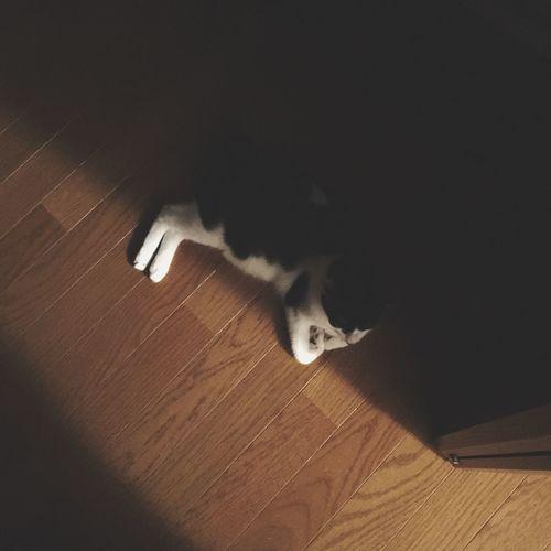 しろくろネコ にゃん 待ち伏せ