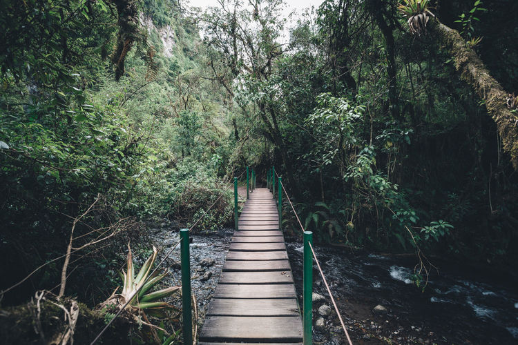 Plant Direction Tree The Way Forward Forest Growth Nature Land Tranquility Bridge Green Color Day Beauty In Nature No People Footpath Connection Outdoors Tranquil Scene Architecture Non-urban Scene Footbridge Bridge - Man Made Structure Diminishing Perspective River Nature Springtime Decadence