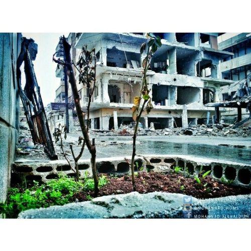 مهما ماكانت صغيرة .. ازرعها لـ يبقى_الأمل :) هنا_حمص حمص syria Homs