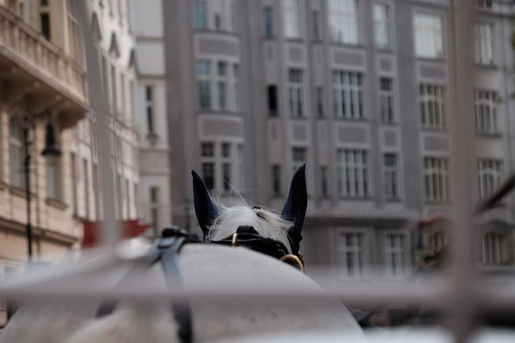 View of a horse in a city