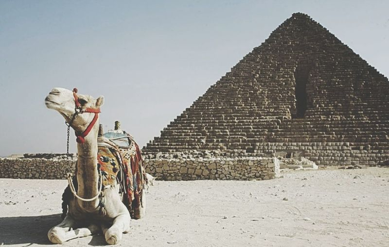 I visited Egypt in 2009 and I will still like to go back soon. Lots of amazing landmarks there. EyeEmbestshots Besteyeemtravel Egypt Pyramidofegypt