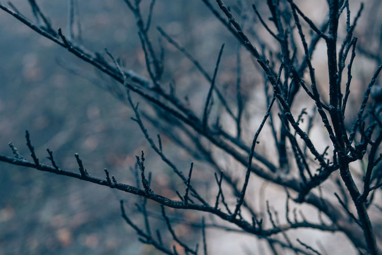 Low angle view of bare tree branches during winter