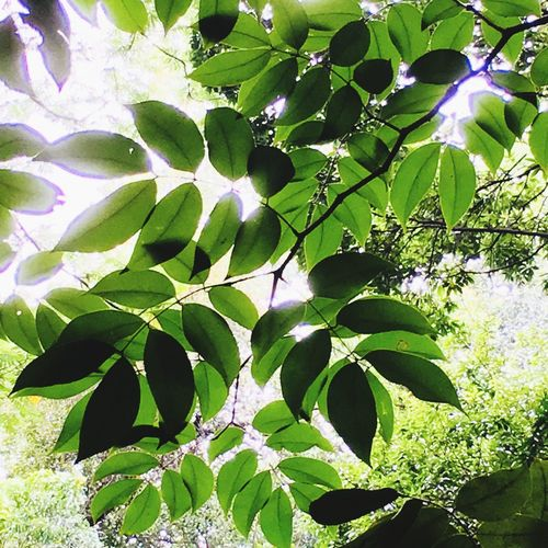 Leaf Growth Beauty In Nature Lifestyles