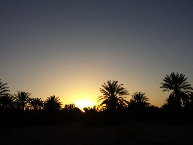 Tree Palm Tree Nature Landscape No People Beauty In Nature Outdoors Sky Sun Sunset Rissani Morocco Trees