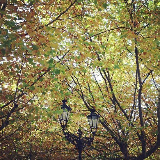 #berlin #weloveberlin #igersberlin #autumnisokay #autumn #indiansummer Berlin Autumn Indiansummer Igersberlin Autumnisokay Weloveberlin