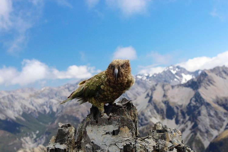 Bird perching on mountain