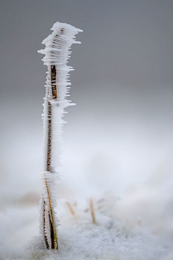 Close-up of icicles on plant during winter