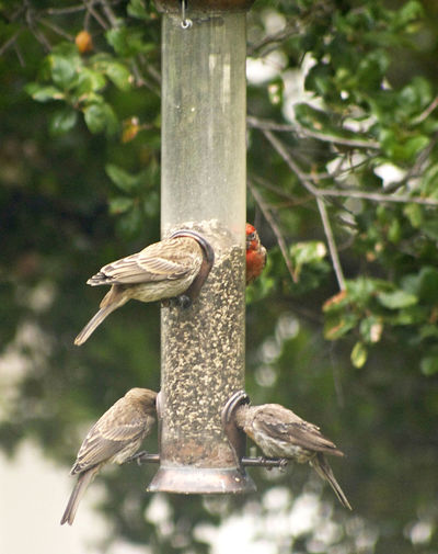 Community Bird Feeder Funny Birds House Finches Love To Watch Them Play Lucky Shot My Back Yard Is Full Of Birds! Nature No People They Go At The Feeder Like It's Filled With Crack