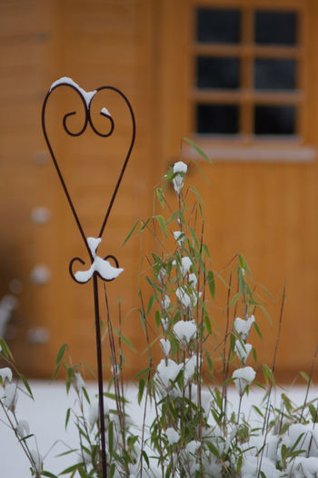 Winter Close-up Day Fragility Freshness Heart Shape Love Nature No People Outdoors Plant Snow Window