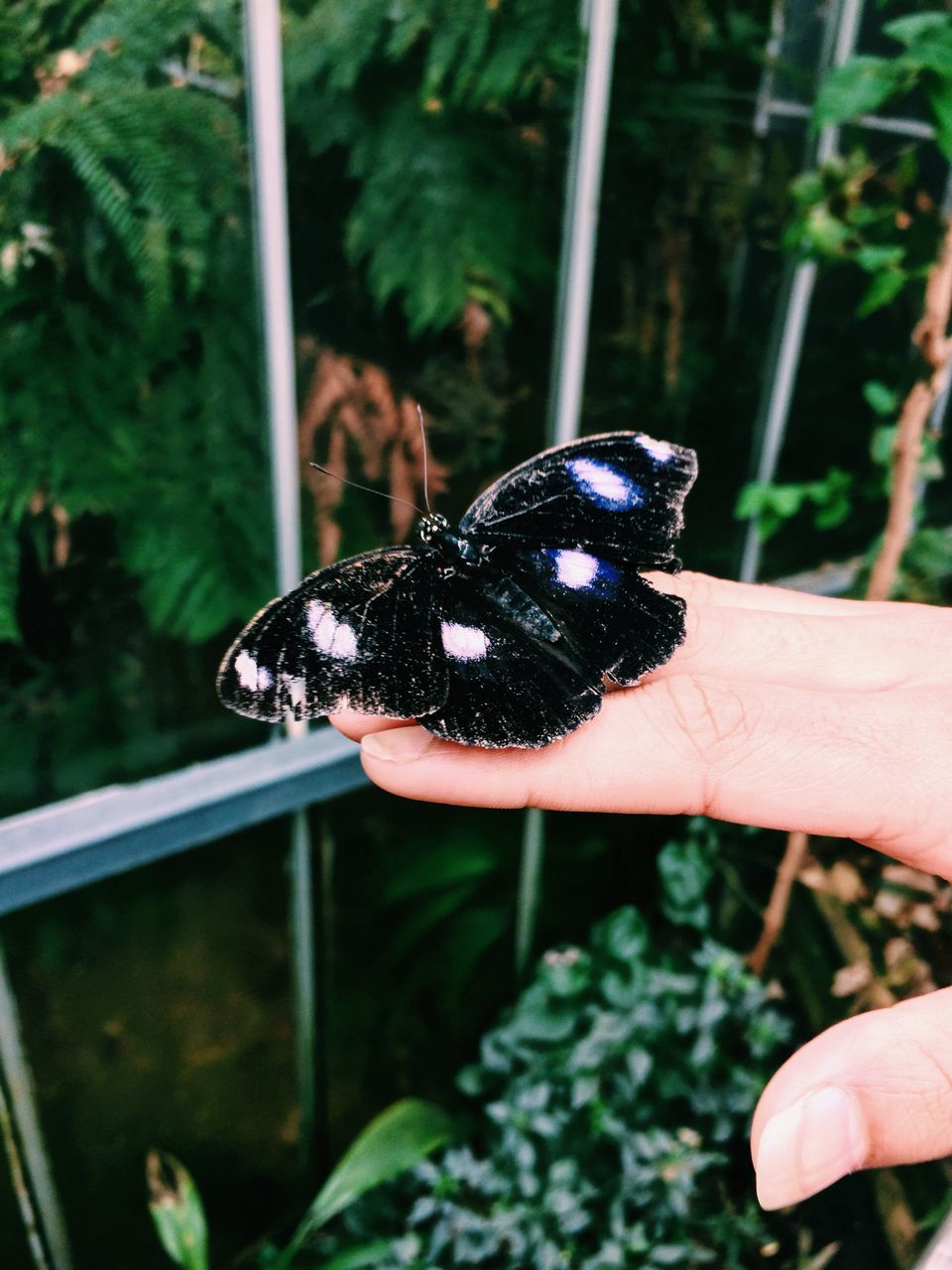 human hand, animal themes, one animal, animals in the wild, real people, animal wildlife, one person, human body part, outdoors, butterfly - insect, insect, day, holding, close-up, plant, leaf, nature, fragility, people