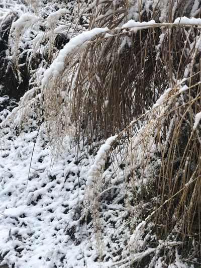 Cold Temperature Snow Winter Frozen Day Beauty In Nature Nature Tree Scenics - Nature Environment No People Tranquility Plant Tranquil Scene Coniferous Tree Covering White Color Non-urban Scene Land Outdoors