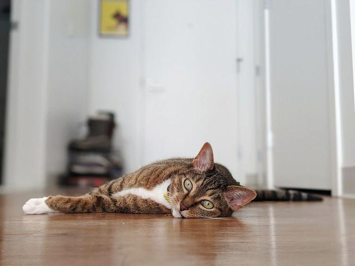 Lazy cat eyes