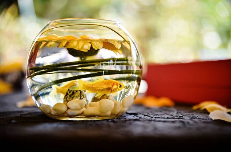 Glass - Material Close-up Table Yellow No People Indoors  Fragility Day Fishbowl Freshness EyeEm Best Shots EyeEm Nature Lover Eye4photography  Bestoftheday Nature Nature Photography Animal Themes Animals In The Wild Animal Cute Beauty In Nature Beautiful