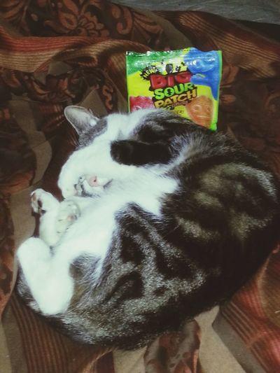 Meet my kitty Mitens Kitty Love